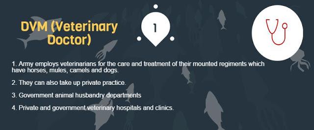 Veterinary DVM Doctor Career Scope in Pakistan Jobs Opportunities Guideline