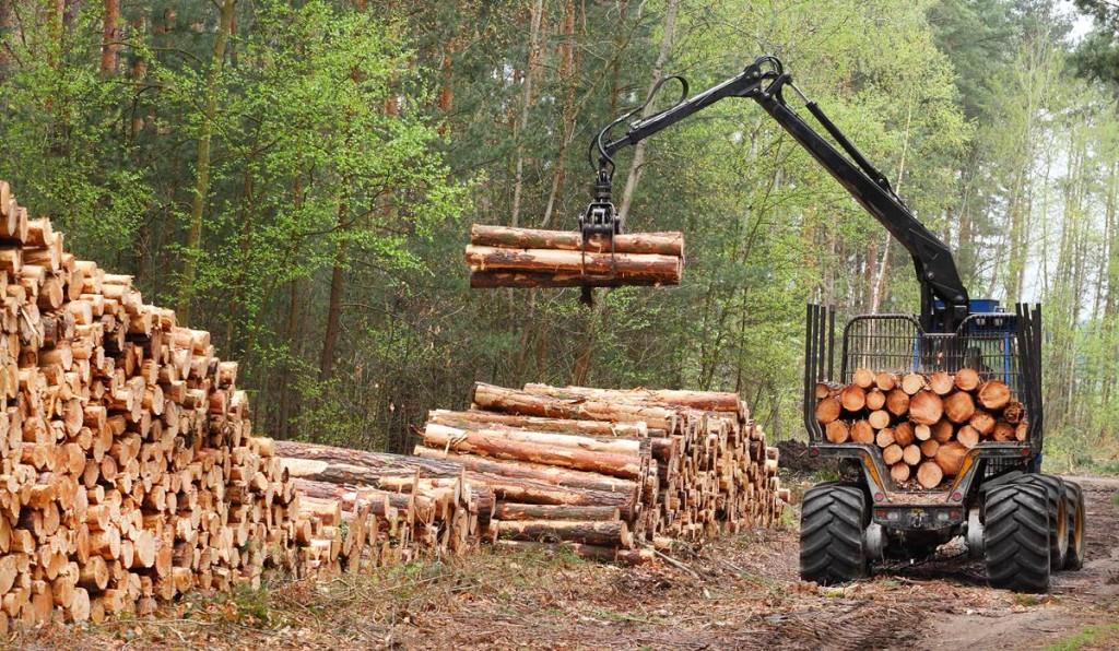 Forestry Career Opportunities in Pakistan Scope Jobs Requirements
