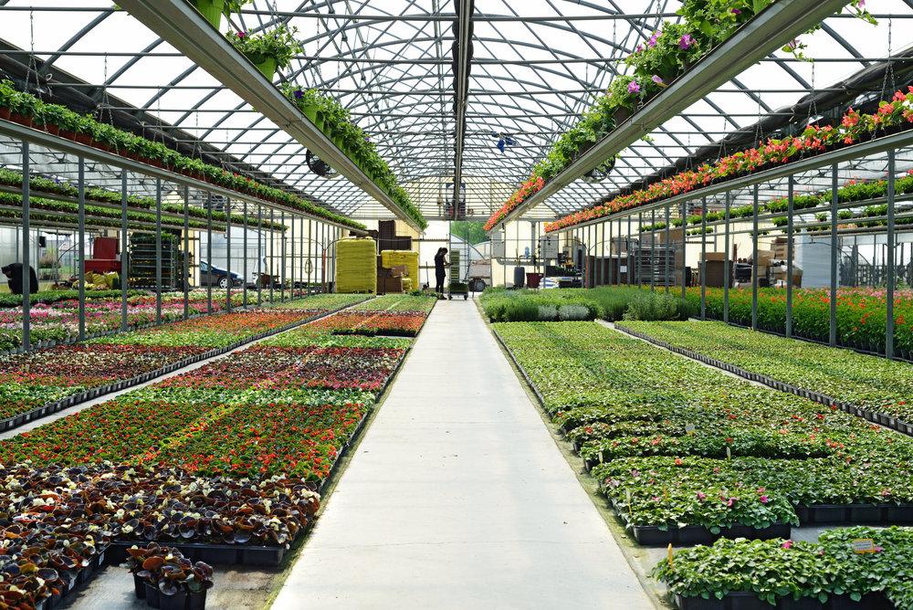 Horticulture Career Scope in Pakistan Jobs Opportunities