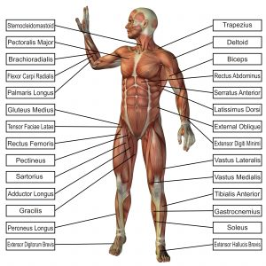 Physiology Career Scope in Pakistan Courses Opportunities Salary Jobs