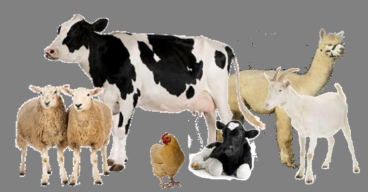 Livestock Field Scope in Pakistan Opportunities Jobs