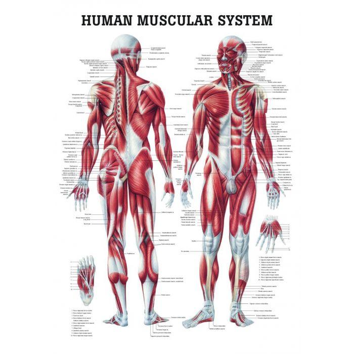 Human Anatomy Courses Career Scope in Pakistan